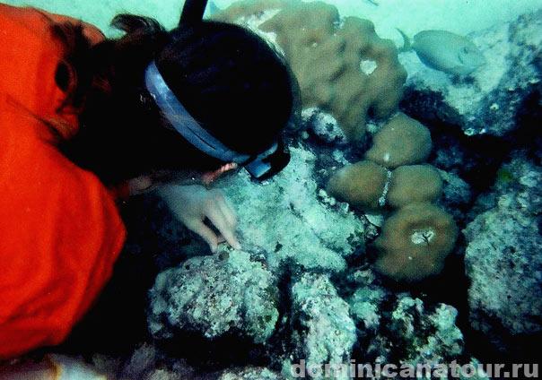 аквариум в доминикане, доминиканская республика фото, доминиканская республика экскурсии, туры в доминикану