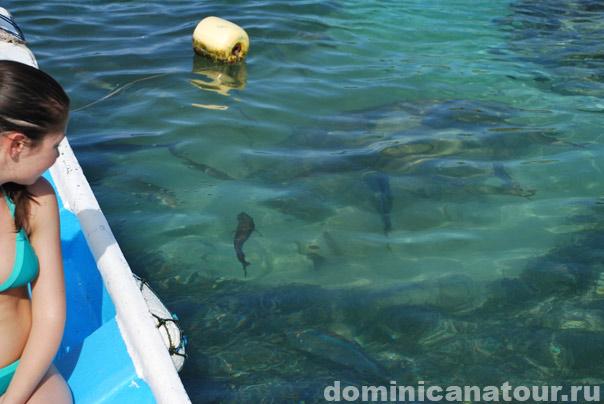 свадьба +в доминикане, доминикана отзывы туристов, перелет +в доминикану, доминикана виза, погода +в доминикане сейчас
