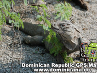 Our Garmin Dominican Republic maps will guide you to all interesting places in Dominican Republic